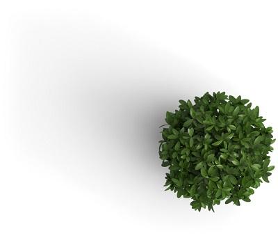 Pflanze von oben