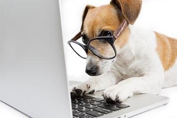 Hund sucht im Internet Adwords Anzeigen